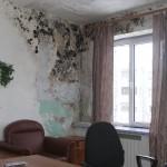 Как избавиться от грибка и плесени в квартире (на стенах) — борьба с грибком