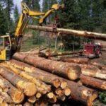 Дерево в строительстве