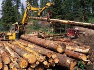 Заготовка дерева