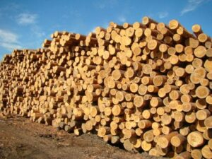 сруб леса