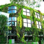 Озеленение крыш и вертикальное озеленение