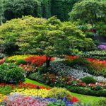 натургарден из цветов