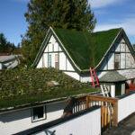 Живая крыша: преимущества и недостатки