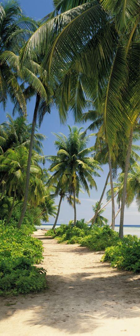 Фотообои Komar Tropical