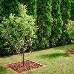 посадка деревьев