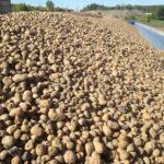 Покупка и доставка гравия в Твери от компании «СтройИнвест»