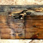 Болезни древесины
