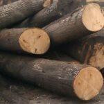 Древесина из липы — свойства и сфера использования