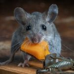 Как избавиться от мышей в деревянном доме?