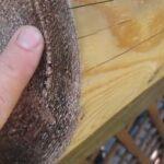 Борьба с домовым грибком