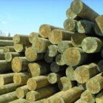 Антисептированные деревянные опоры ЛЭП