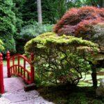 Особенности ухода за молодым садом