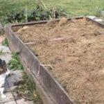 Что такое мульчирование почвы, как приготовить мульчу