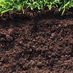 Плодородный грунт или торфо-песчаная смесь