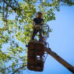 Спил сухих деревьев в Самаре от компании «Трустрой»