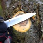 Уход за деревьями: обрезка сучьев