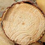 Какое время года лучше подойдет для строительства деревянного дома