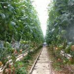 Работа в Польше на ферме: особенности трудоустройства и заработная плата